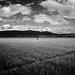 Rice Fields by IanBrewer