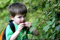 berry taster