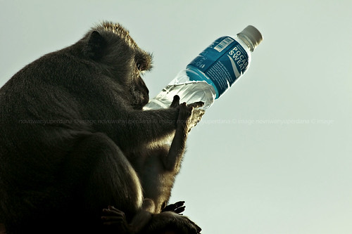 bali animal indonesia monkey asia southeastasia uluwatu canonef70300mmisusm canoneos50d uluwatuluhurtemple