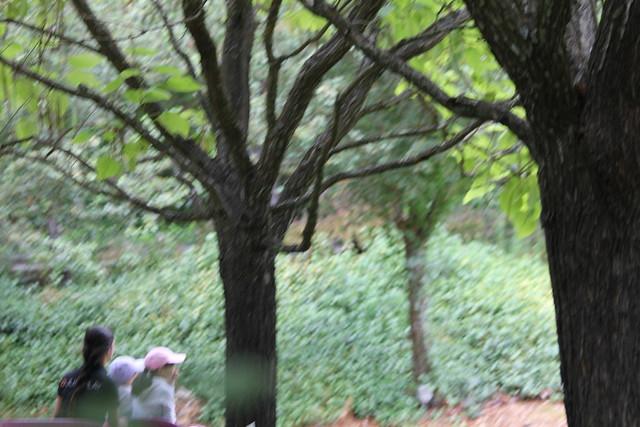 Gilroy Gardens 018 Flickr Photo Sharing