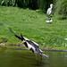 Rotterdam Blijdorp-Stork by ksvrbrg