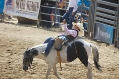 team penning(0.0), charreada(0.0), animal sports(1.0), rodeo(1.0), western riding(1.0), event(1.0), equestrian sport(1.0), sports(1.0), western pleasure(1.0), reining(1.0),