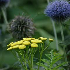 jaune, bleu, vert / yellow, blue, green - Photo of Magnicourt-sur-Canche