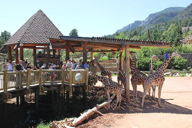 colorado springs zoo giraffes | Flickr - Photo Sharing!