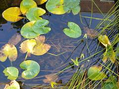 Collins-Olin Pool in fall