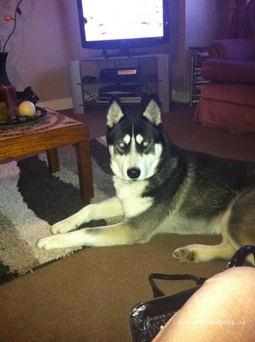 Wed, Feb 9th, 2011 Lost Male Dog - Kilcormac, Ballyboy, Offaly