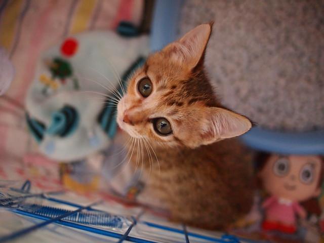 笼中小花猫 | flickr – 相片分享!
