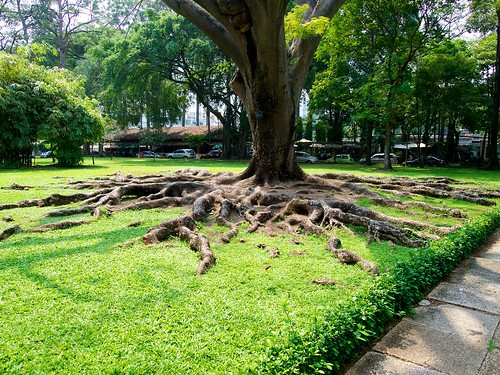 Root of the old tree
