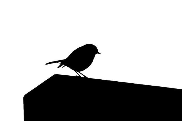 Robin silhouette