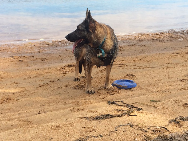 Zille on the beach