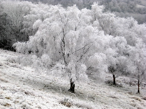 Frosted Trees - West Malvern, Worcestershire, UK