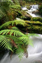 Cement Creek cascades, Yarra Ranges National Park, Victoria