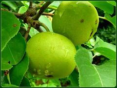 flora, green, produce, fruit, food,
