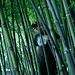 Love the Bamboo by elisa vision