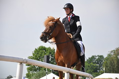 animal sports, equestrianism, english riding, eventing, dressage, stallion, show jumping, hunt seat, equestrian sport, sports, recreation, outdoor recreation, equitation, horse, jockey, person,