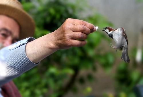 Alimentando passarinho / Feeding Birds - Paris