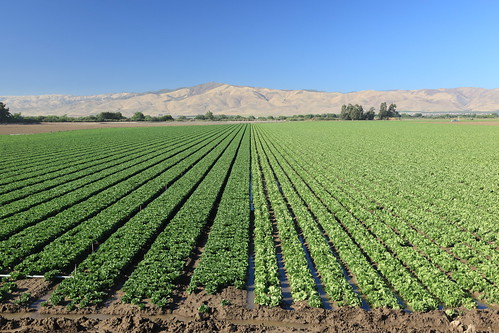 california usa photo lenstagged farm lettuce crops elcaminoreal 1600squirrels montereycounty soledad polarizer salinasvalley hoya 3x2 canon24105f4 superhmc 5dii