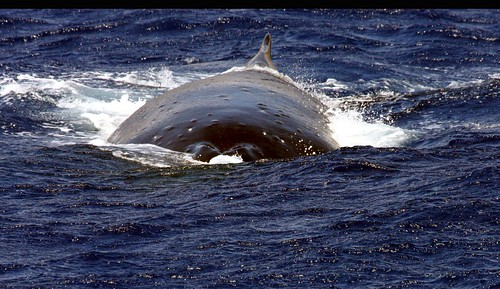 whale watching on Maui..........................6000