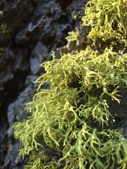 flower(0.0), soil(0.0), tree(0.0), moss(0.0), algae(1.0), seaweed(1.0), leaf(1.0), plant(1.0), flora(1.0), green(1.0), non-vascular land plant(1.0),