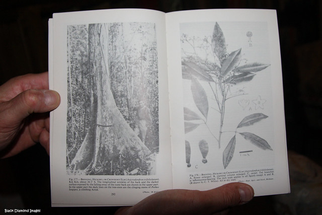 WD Francis's  Book Australian Rainforest Trees - Published 1929