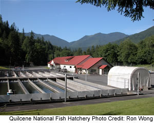 Quilcene National Fish Hatchery Flickr Photo Sharing