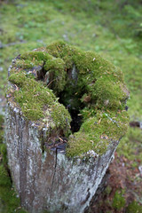 tree stump, soil, tree, flora, green, trunk, moss,
