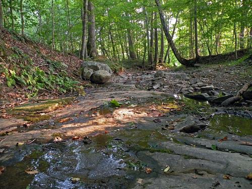 creek forest woods westvirginia lewisburg garysnyder campalleghany greenbrierriver campalleghanyforgirls