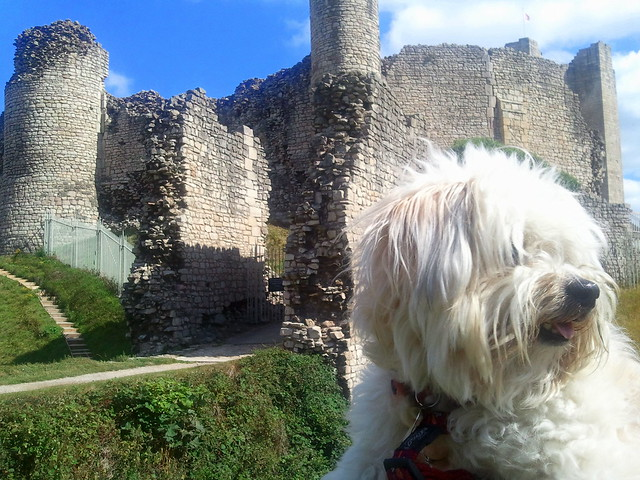Gaspode at Conisbrough Castle