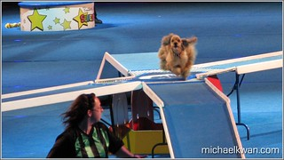 Superdogs at PNE 2010