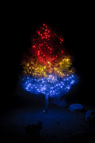 light night canon lights christmastree christmaslights 40d