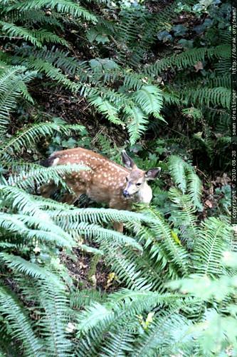 deer dining in our backyard