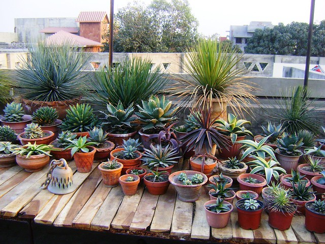 Succulent Garden Flickr Photo Sharing