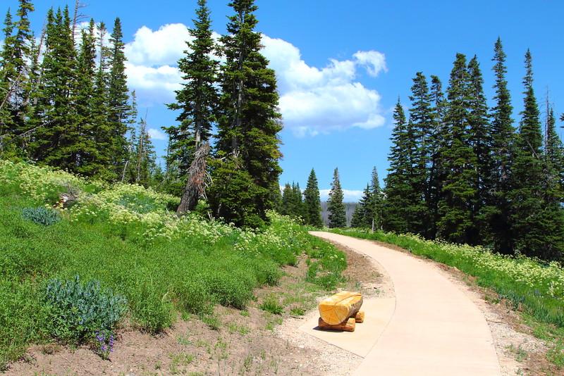 IMG_6403 Sunset Trail
