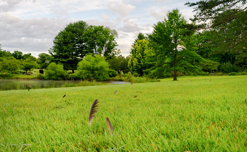 meadowlark virginia clouds landscape sky