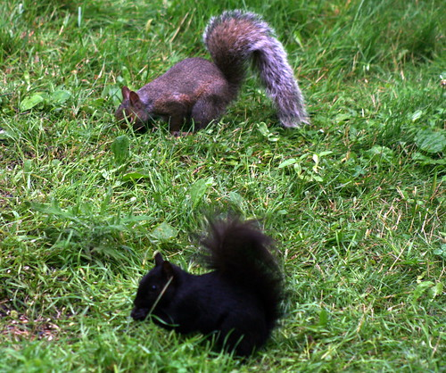 Squirrels_2287