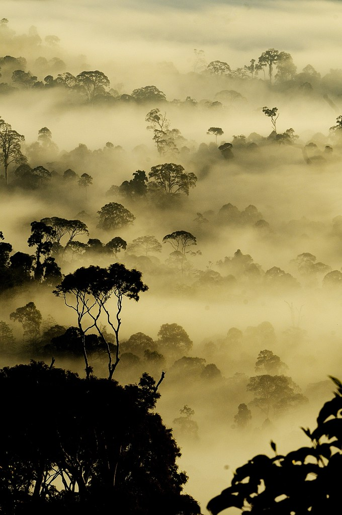 Dawn Images