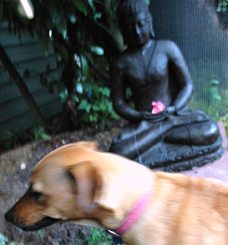 Buddha statue and Rosie, backyard, Seattle, Washington, USA by Wonderlane