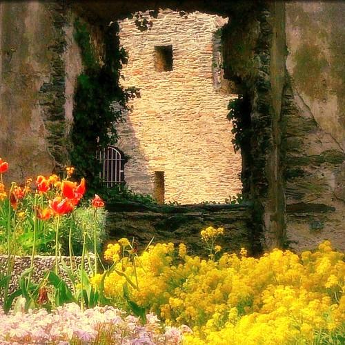 "...life goes on... (ruins of the castle ""Burg Rheinfels"")"