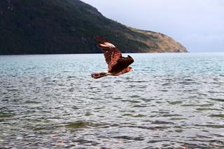 El Bolson - Bird over Lago Puelo