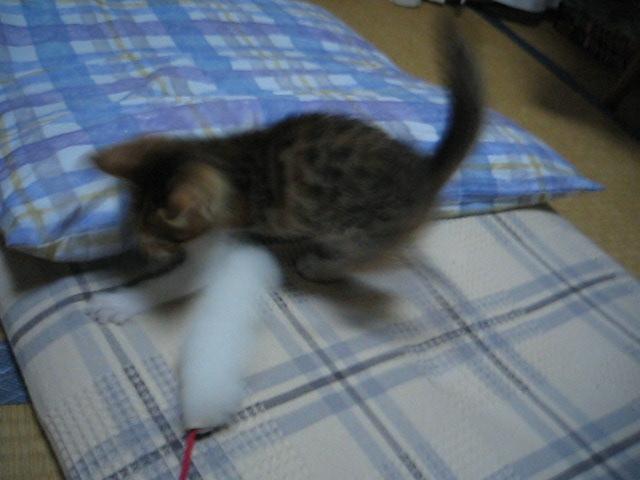 仔猫の遊び相手をするのは大変ですよ