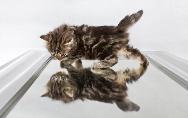 Mirror cat #2