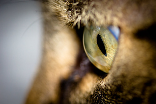 A Cat's Senses: 15 Fascinating Facts