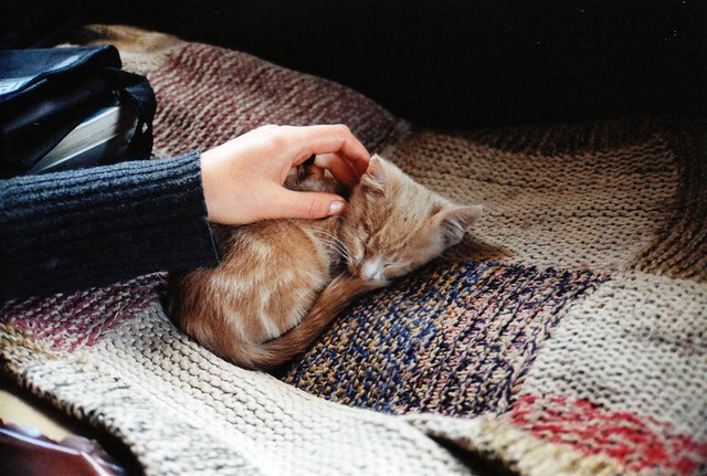 Südafrika/ south africa - Lesotho - Katze, cat.