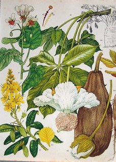 Vintage Botanical Prints Flowers