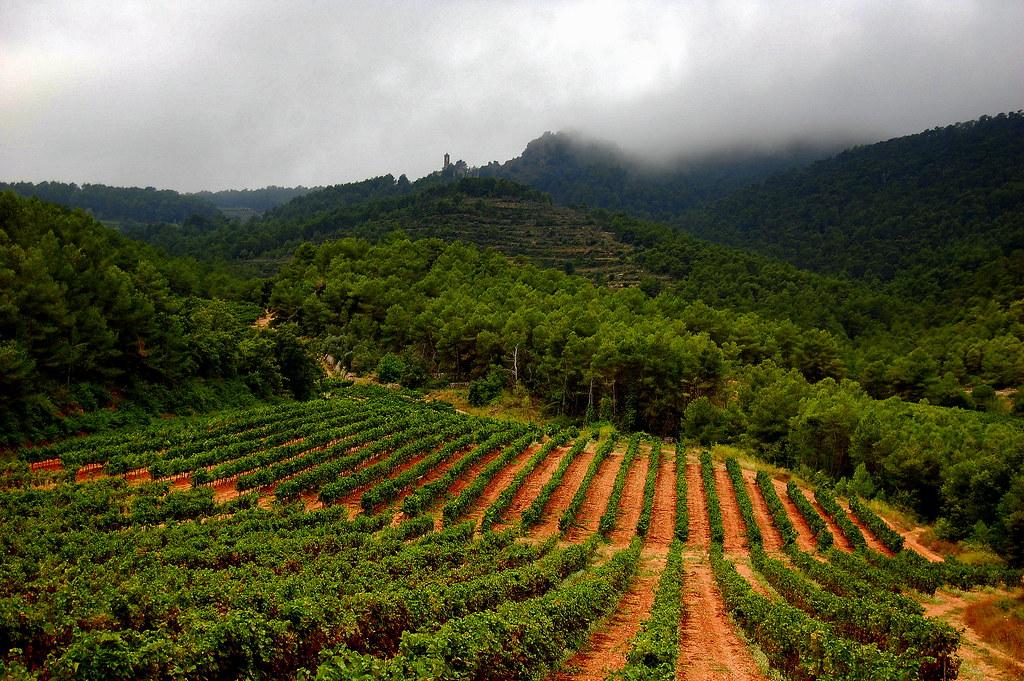 Luxury wine vacations