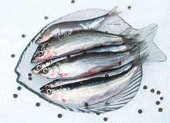 mackerel(0.0), sauries(0.0), forage fish(0.0), bonito(0.0), red seabream(0.0), barramundi(0.0), sardine(0.0), animal(1.0), fish(1.0), fish(1.0), seafood(1.0), oily fish(1.0), capelin(1.0), food(1.0), milkfish(1.0),
