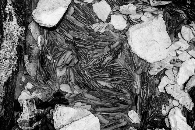 devon stones