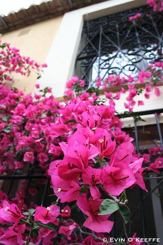 Flowers at Masia de Xamandreu