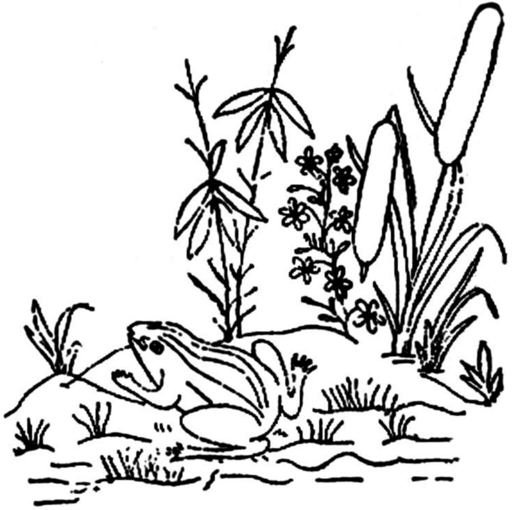 Swamp art coloring pages for Swamp animals coloring pages