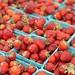 Seedling jewel strawberries